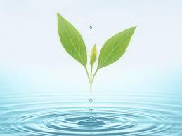 water-riplles-leaf